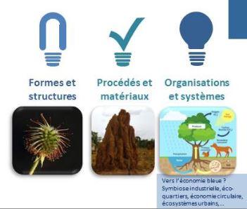 bio-mimetisme-idees-folles-3-niveaux